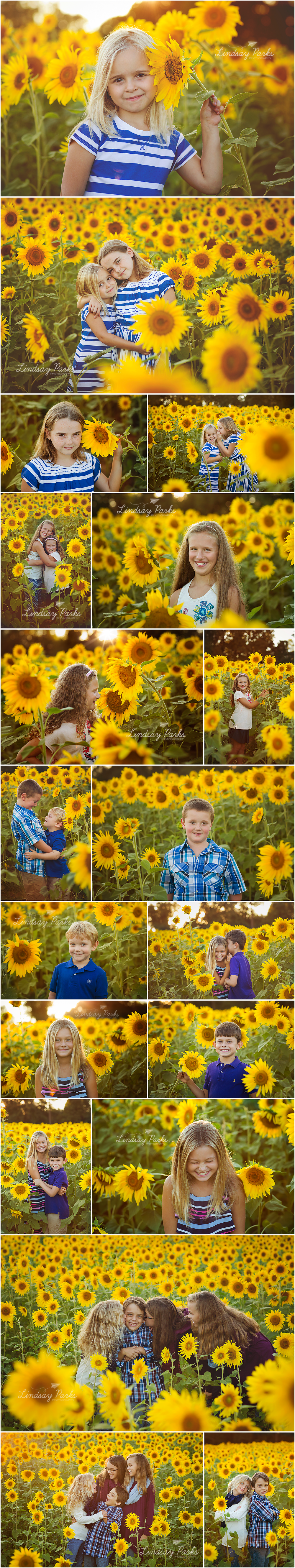 harford_county_maryland_child_photographer_sunflowers